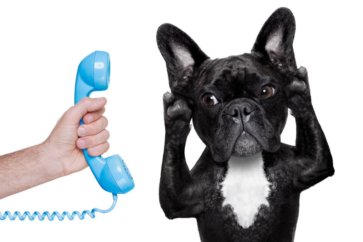 how to answer the phone dog